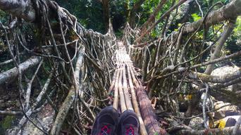 Living Roots Bridge, Meghalaya