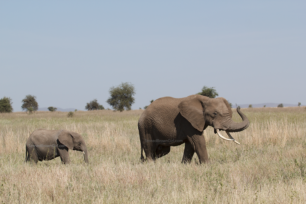 Mama elephant and calf in Serengeti, Tanzania, Africa