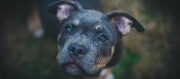 Texas Dog Bite Victim Resources