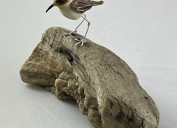sandpiper on driftwood