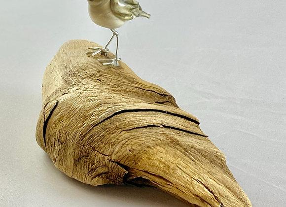 sandpiper on driftwood