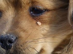 dogs-and-ticks.jpg