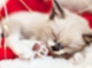 christmas-kitten-2.jpg