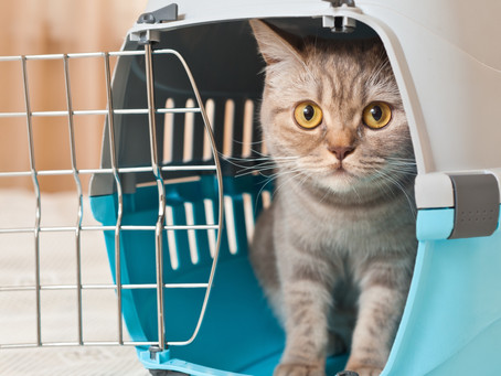 Your Cat and the Carrier can be BFFs