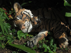 Tiger and Cub in garden