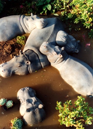 Hippo Wallow