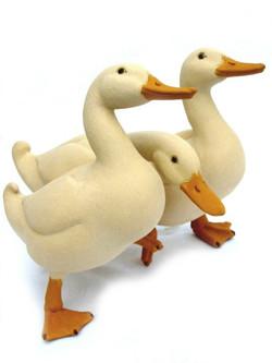 Duck Trio