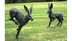 Large Running Hares