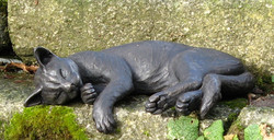 Pheobe Sleeping with Hanging Paw