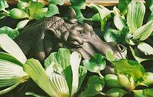 Hippo Head  300dpi.jpg