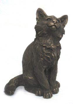 Raffy Main Coon Kitten