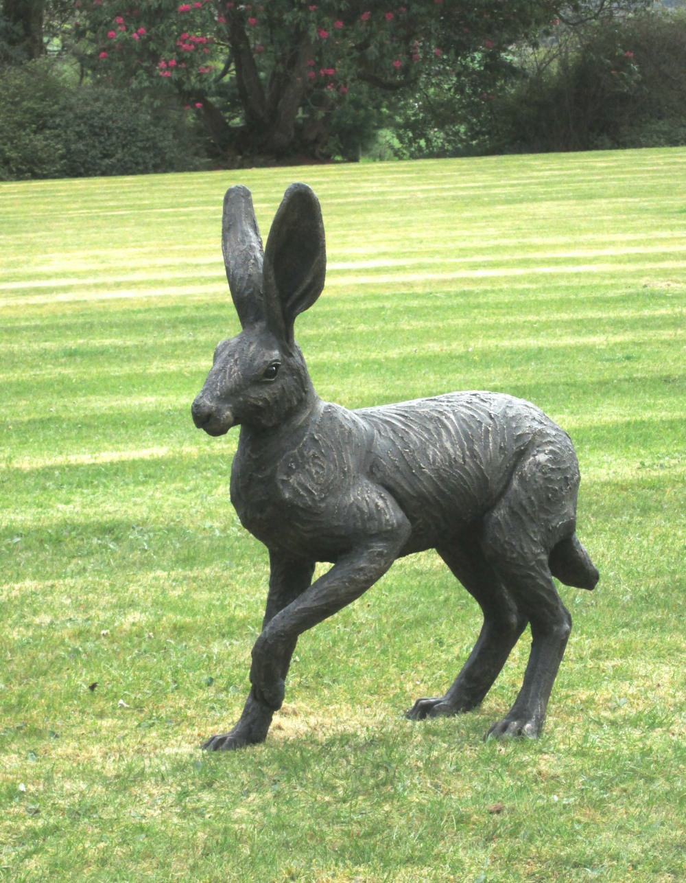 Large Hare about to Run