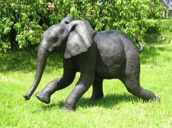Chinja Running Elephant Calf