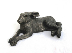 medium Lying Hare