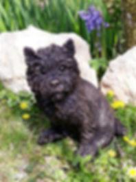 Poppy Cairn Terrier W.jpg