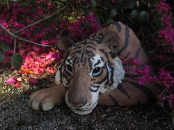 Tiger Head at Delamore