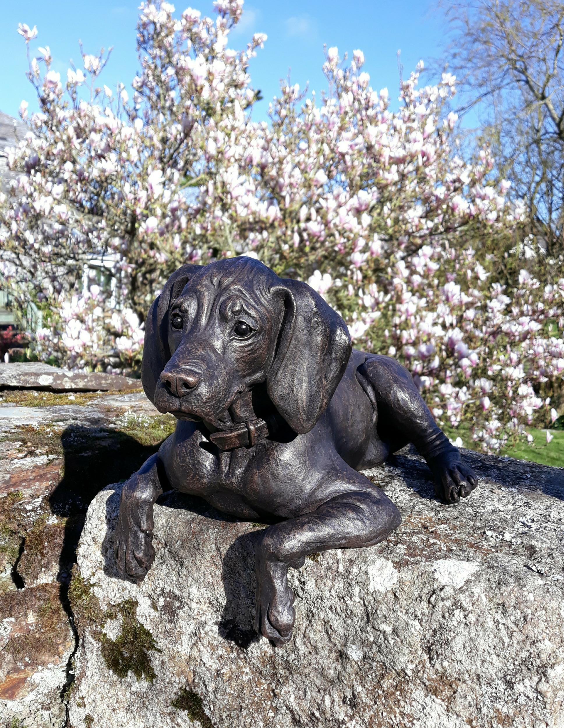 Cooper Vizsla Puppy