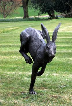 Large Running Hare