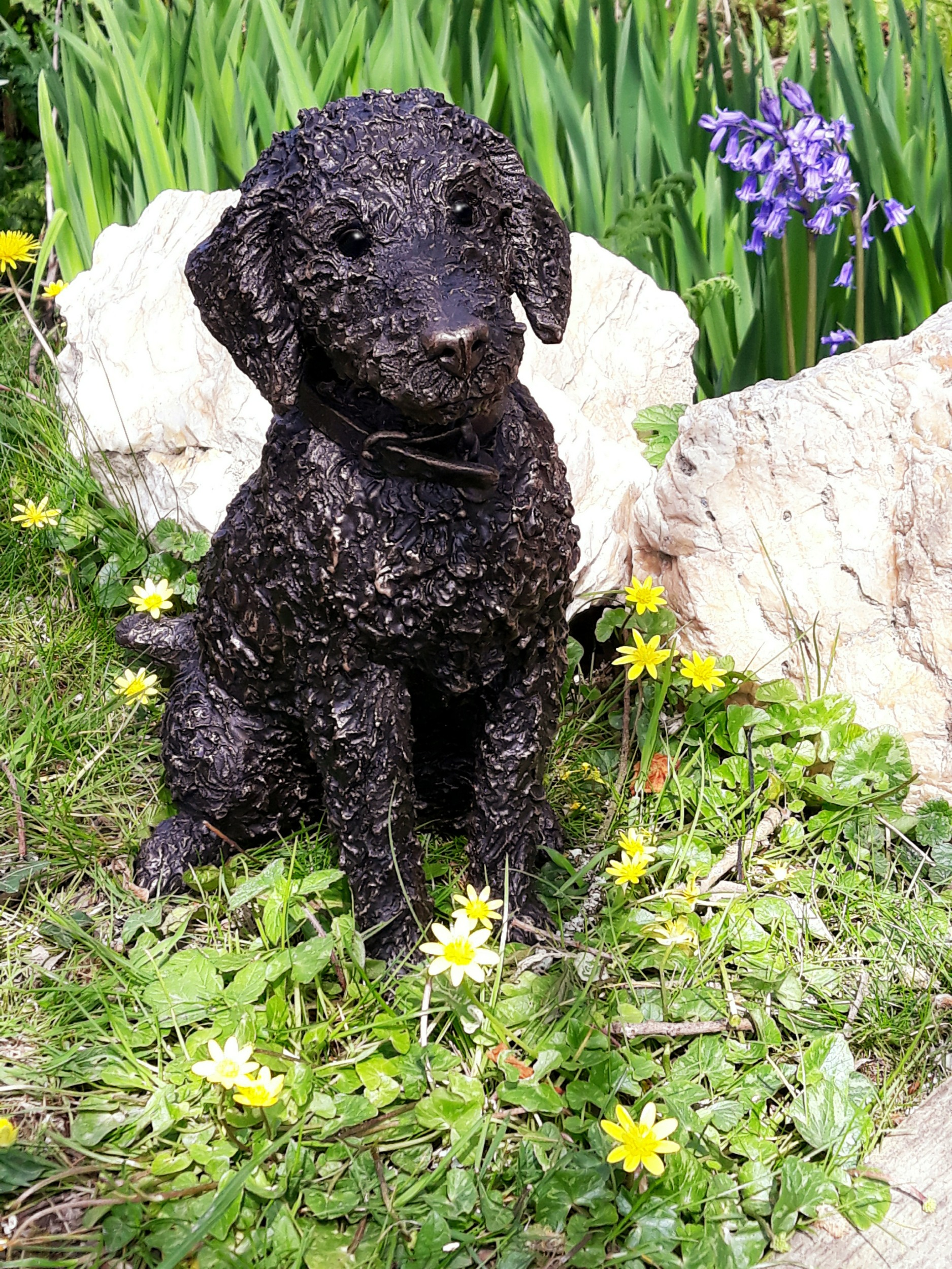 Flo - Bedlington Terrier