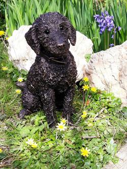 Flo - Bedlington Terrier