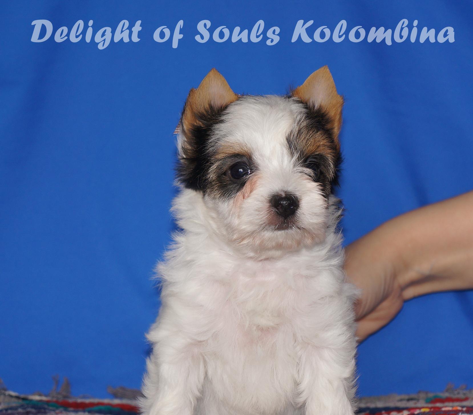 Delight of Souls Kolombina