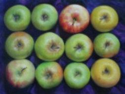 """Kathleen Erin Lee, Apples, 35 x 42"""", Oil on canvas"""