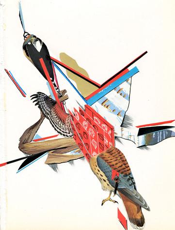 """""""Flight Study"""", 2012"""