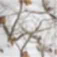 Screen Shot 2020-01-21 at 3.19.14 PM.png