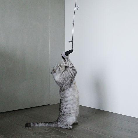 Cat_teaser_R0001507.jpg