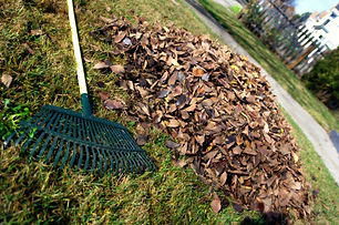 Leaf_rake_and_leaves.jpg