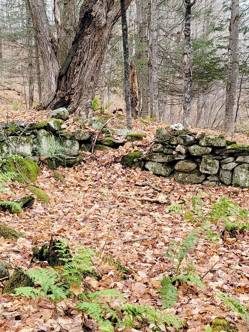 Bâtiments secondaires, en face de la maison de l'autre côté (est) du chemin Hoyt (sentier no 2). (Whittier-Paige).  Photo : Denis Tremblay, 2020.