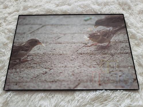 Animal Framed Art