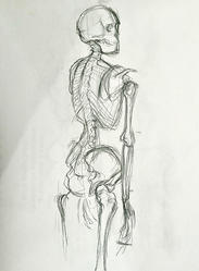 Skeleton Drawing, Pencil