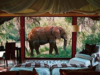 Madikwe Elephant.jpg