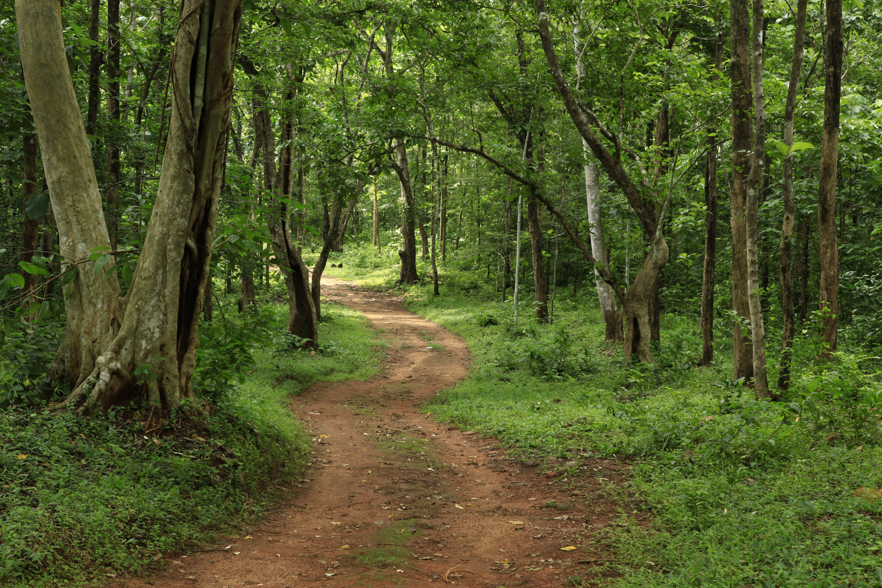 Scenic Village Walk, Alappuzha