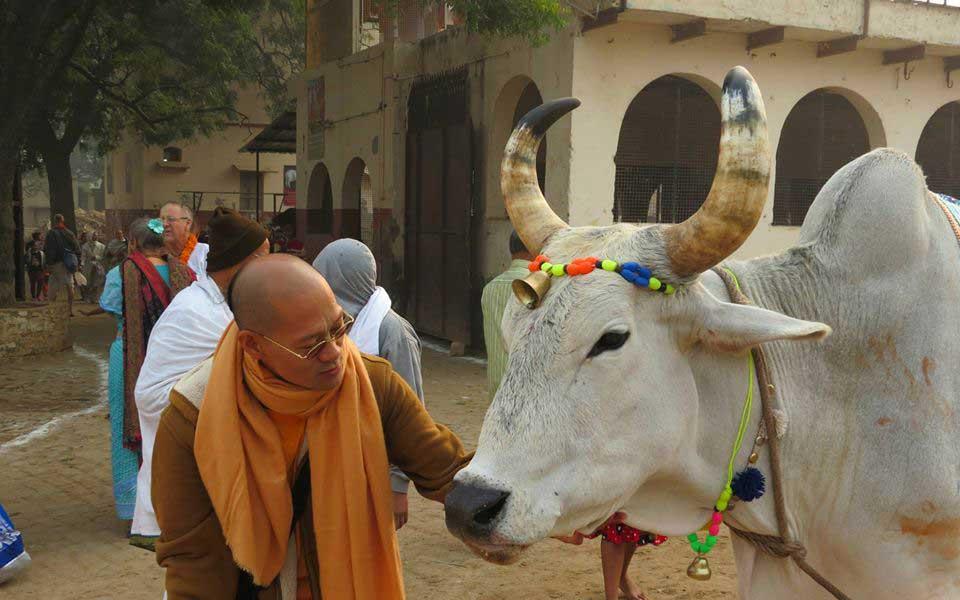Gaushala (Cow Shed)