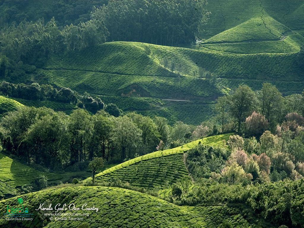 Munnar Landscape View