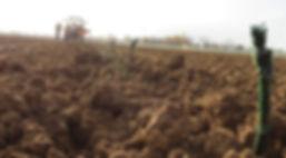 di Lenardo - planting vines