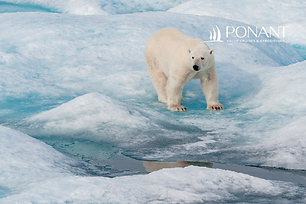 8D Unexplored Svalbard | Departure 4 Jun 2021 and Other Dates