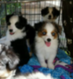 Puppypic1-Feb 21.jpeg