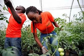 Agriculture: Promouvoir l'entrepreneuriat et l'employabilité des jeunes
