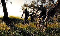 mountain bike01.jpg