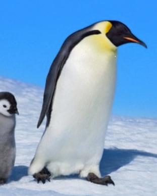 Pinguino.PNG