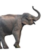 Elefante.PNG