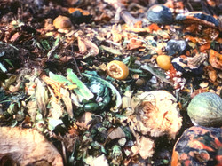 Compost Pile, 1977