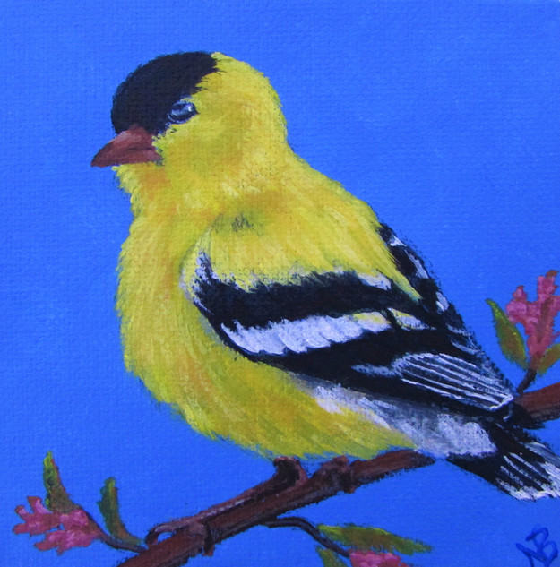 SOLD - Chubby Goldfinch
