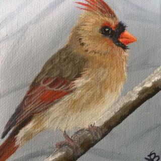 Chubby Female Cardinal