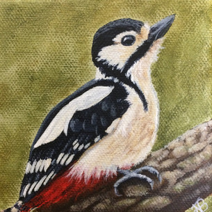 """""""Great Spotted Woodpecker"""""""