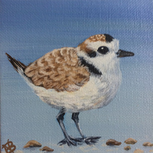"""SOLD""""Piping Plover Boy"""""""