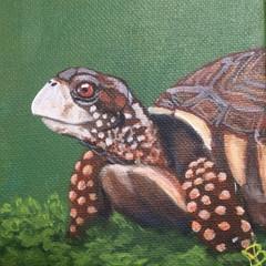 """""""Tiny Tortoise"""""""